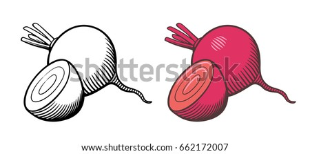 Vector hand drawn illustration of beets. Whole beetroot and cross section. Outline and colored version