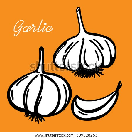 Vector hand drawn illustration with spice garlic #309528263