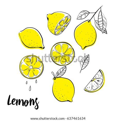 vector hand drawn lemon