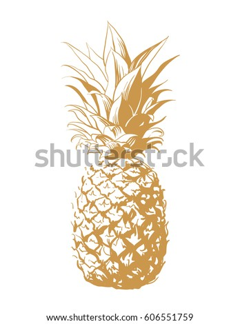 vector hand drawn pineapple