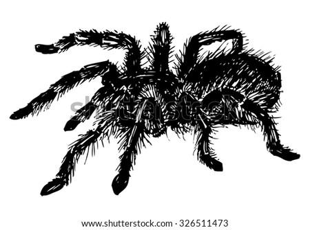 vector hand drawn realistic