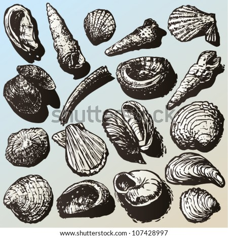 Vector hand drawn sea shell collection.