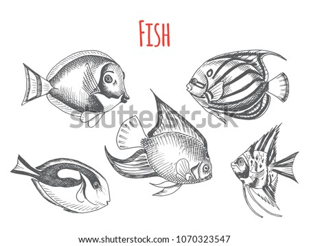 Tropical Fish Vectors Download Free Vector Art Stock Graphics