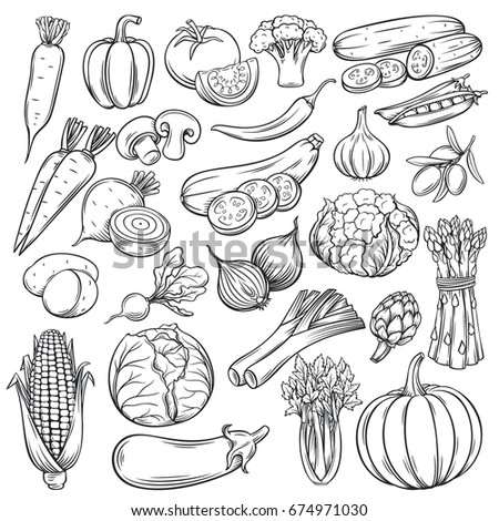Vector hand drawn vegetables icons set. Sketch style collection farm product restaurant menu, market label. #674971030