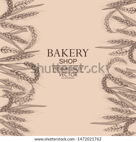 Vector hand drawn wheat ears. Farm field illustration. For packing.Bunch of grain barley.Banner design. Barley illustration in vintage style.Wheat grain,granule, kernel,corn,rye,barley,oats,pic.