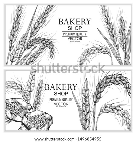 Vector hand drawn wheat ears set. Farm field illustration. For packing.Bunch of grain barley.Banner design. Barley illustration in vintage style. Wheat grain, granule, kernel, corn, rye, barley, oats
