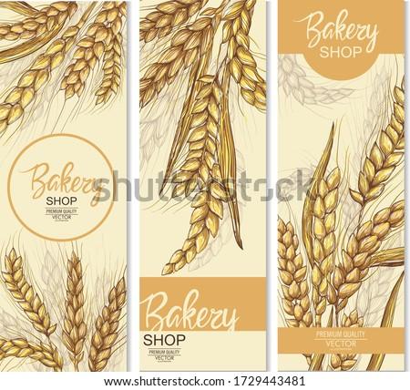 Vector hand drawn wheat ears set. Farm field illustration. For packing.Bunch of grain barley.Banner design. Barley illustration in vintage style. Wheat grain, granule, kernel, corn, rye, barley, oats