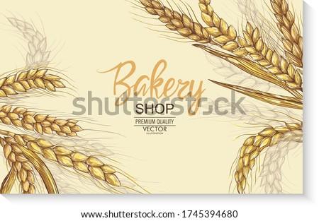 Vector hand drawn wheat ears set. Farm field illustration. For packing.Bunch of grain barley.Banner design. Barley illustration in vintage style. Wheat grain, granule, kernel, corn, rye, barley,oats