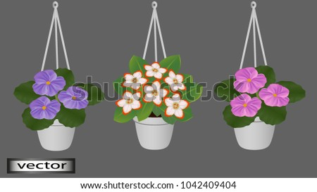 Vector. Hanging pots with flowers, flower pots, decoration hang on the balcony of the veranda in the room, the house. Flowers for the interior. Illustrations in 3D.