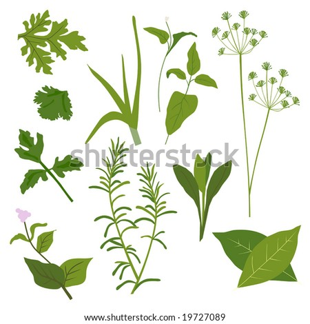 Vector Herb Collection is original artwork.
