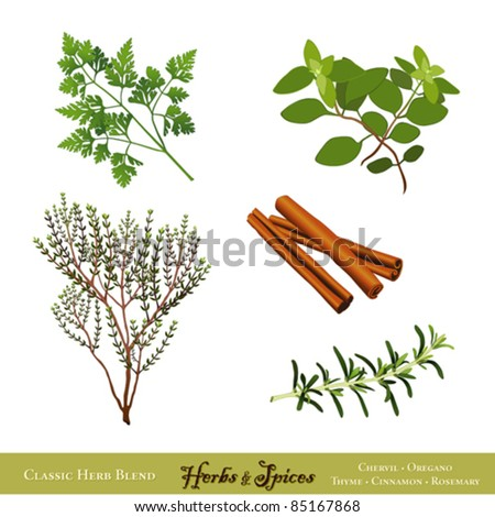 vector - Herbs and Spices. Classics for cooking: French Chervil, Italian Oregano, English Thyme, Cinnamon, Rosemary, isolated on white.  EPS8 compatible.