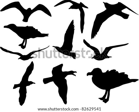 Vector herring seagulls silhouettes isolated over white