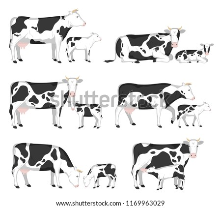 Vector holstein cows and calves in different poses isolated on white for farms, groceries, packaging and branding.