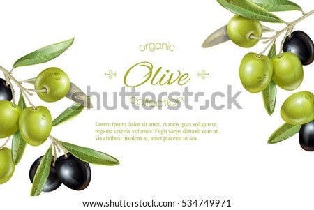 Vector horizontal banner with ripe black and green olives on white background. Design for olive oil, natural cosmetics, health care products. With place for text.