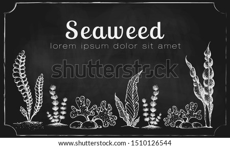 Vector horizontal seaweed banner. vintage background with engraved seaweeds, corals and reef. underwater natural hand drawn elements. Vintage seaweed collection. Wedding or ad template design