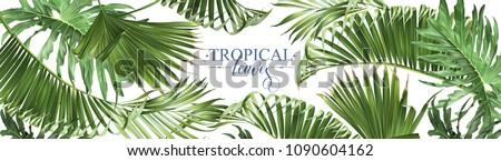 vector horizontal tropical