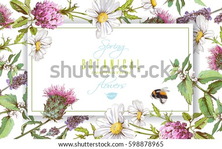 Vector horizontal wild flowers and herbs banner on white background. Design for herbal tea, natural cosmetics, honey, health care products, homeopathy, aromatherapy. With place for text