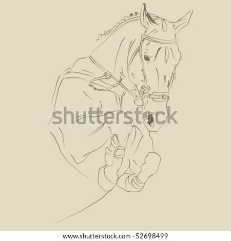 vector horse sketch