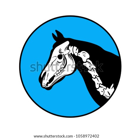 Free Vector Horse Skeleton Download Free Vector Art Stock