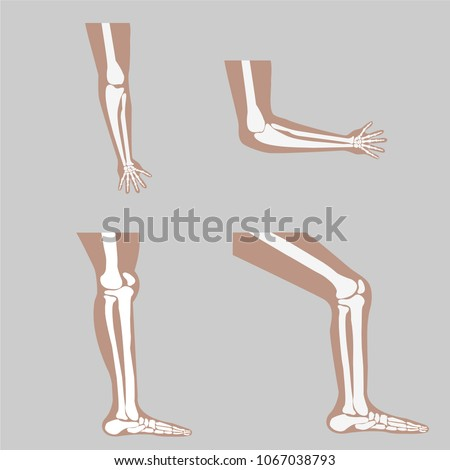 vector human knee and foot leg and hands arms in a bent and unbent view
