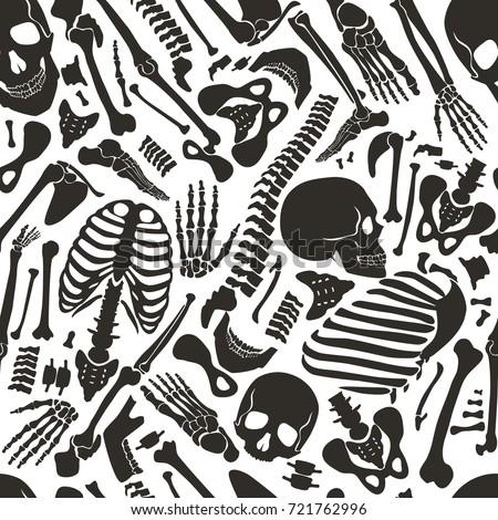 vector human skeleton seamless