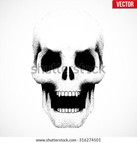 vector human skull with open