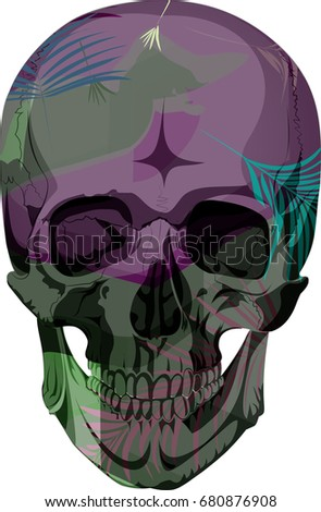 vector human skull with