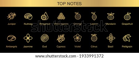 Vector icons aromas top notes. Top notes pyramid chart with examples of popular aroma essences. Smell categories are oriental, woody, fresh and floral. Trend  examples of scents.