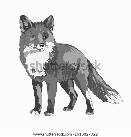 Vector illustration. A fox. Black and white image image.