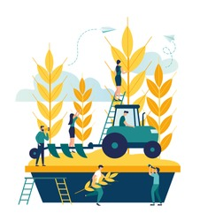 Vector illustration, a process of harvesting crops on a tractor, ears with whole grains and leaves, yellow wheat, rye or barley vector