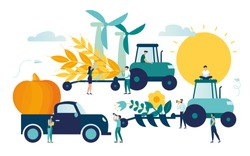 Vector illustration, a process of harvesting crops on a tractor, ears with whole grains and leaves, yellow wheat, rye or barley
