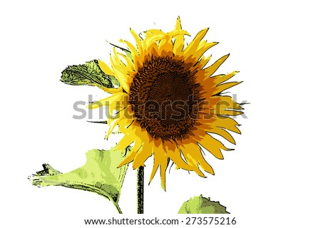 vector illustration beautiful bright flower sunflower bright summer day
