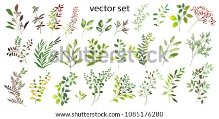 Vector illustration. Botanical collection. A set of wild and garden herbs. Leaves, branches and other natural elements.