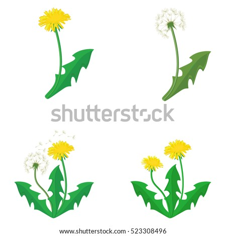vector illustration bouquet of