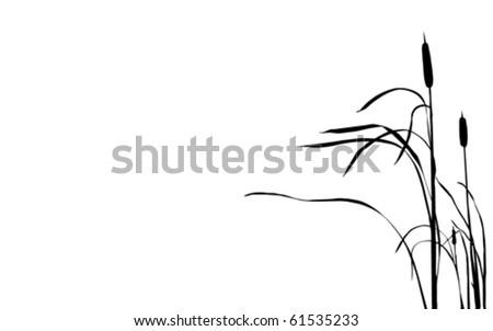 vector illustration bulrush on white background