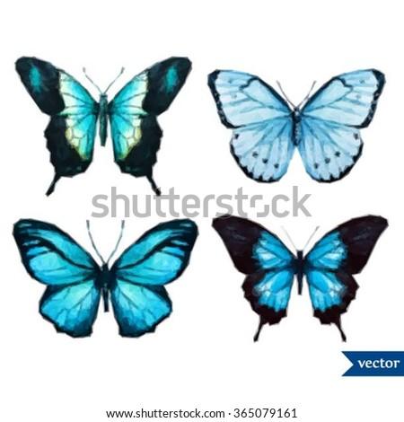 vector illustration butterfly