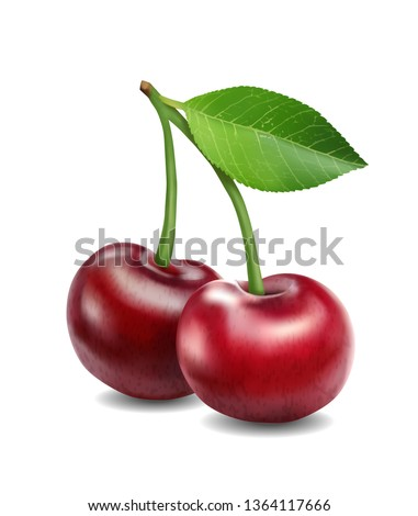 vector illustration cherries