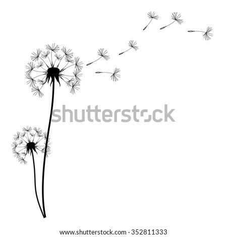 vector illustration dandelion