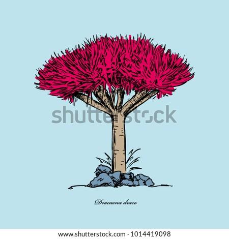 vector illustration dragon tree