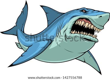 Vector illustration, ferocious shark attacks, on white background.