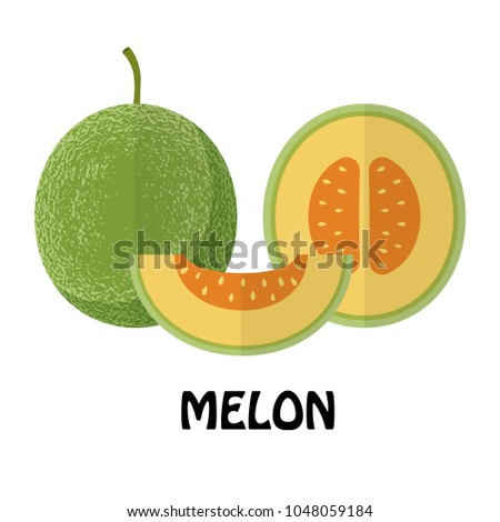Vector Illustration Flat Melon isolated on white background , minimal style , Raw materials fresh fruit