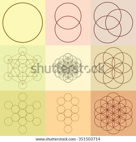 vector illustration   flower of