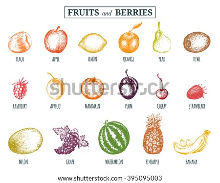 vector illustration fruits and