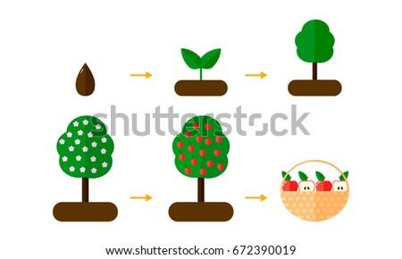 vector illustration growth