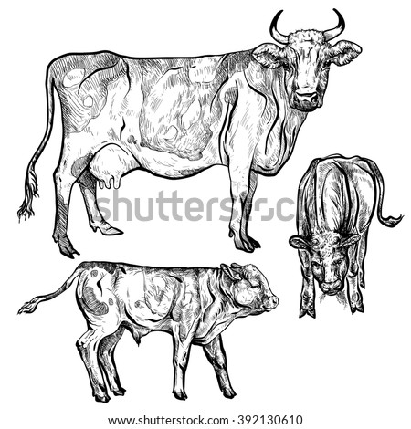 Vector illustration. Hand drawing on a graphic tablet. Cows with calves.