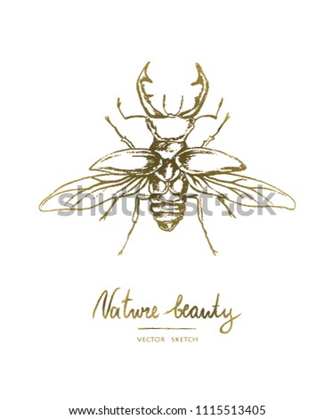 Vector illustration. Hand drawn beetle. Print design element . Chalk style vector.
