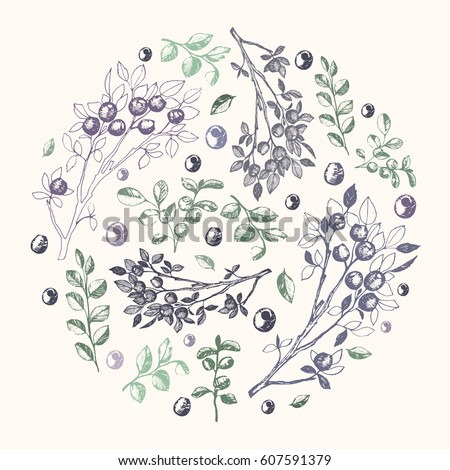 Vector illustration; hand drawn blueberry branches and leafs compound into the circle