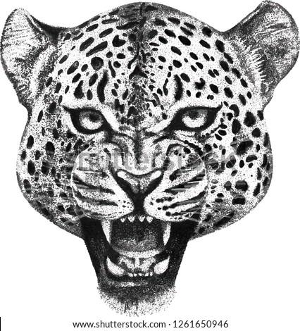vector illustration hand drawn