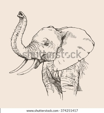 Vector illustration. Hand drawn realistic sketch of an elephant