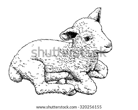 Vector illustration, hand drawn sketch of a cute little lamb, isolated on white background